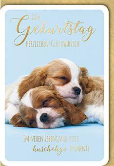 Geburtstagskarte Spruch Zwei schlafende Welpen