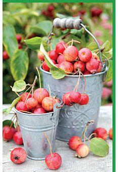 Blankokarten Äpfel in Eimern