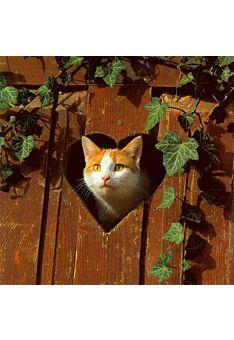 Grußkarte quadratisch ohne Text Katze Herz Holz