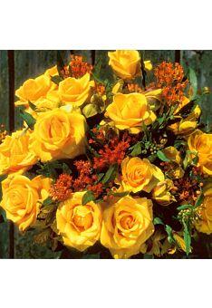 Grußkarte quadratisch ohne Text Rosen gelb