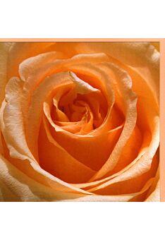 Grußkarte quadratisch ohne Text Rosenblüte