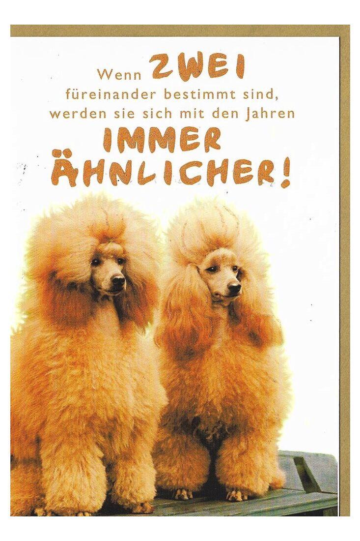 Grußkarten Grußkarte lustig Hunde Pudel Spruch