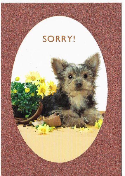 Entschuldigungskarte Hund Sorry