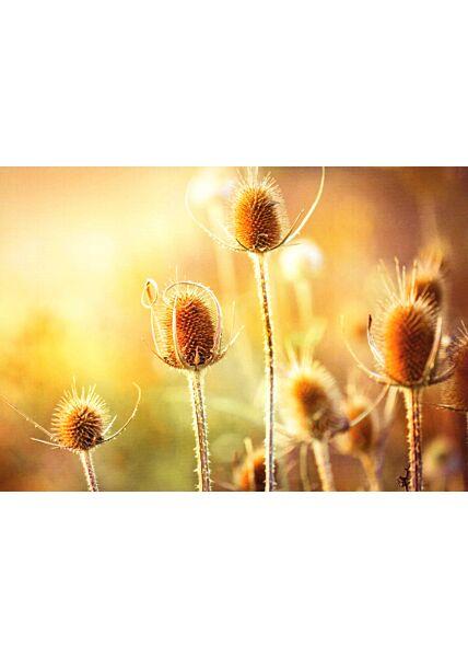 Blumenkarte Thistle