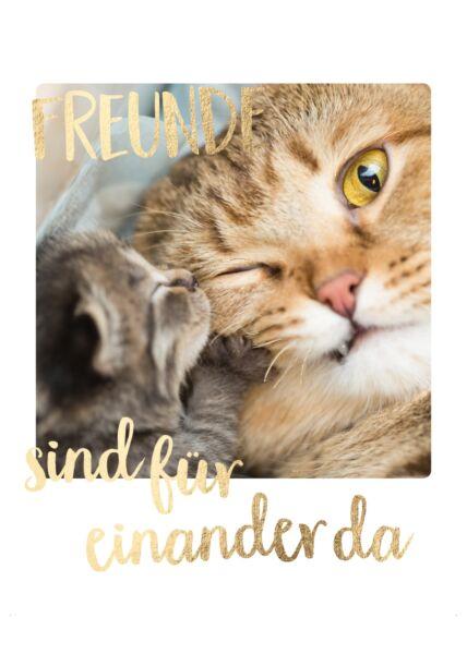 Postkarte Freundschaft Zwei Katzen Freunde sind füreinander da