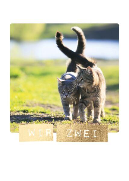 Postkarten Liebe hoch Zwei Katzen Wir zwei