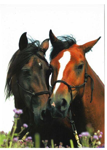 Grußkarte Pferde Freundschaft Liebe