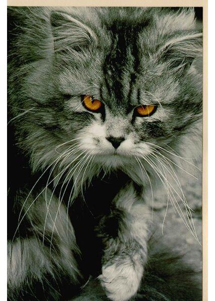 Karte Katze ohne Text blanko
