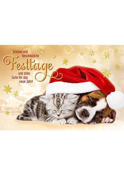 schöne Weihnachtskarte Hund und Katze Schöne und beschauliche Festtage