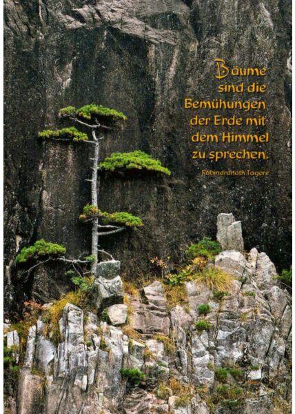 Postkarte Sprüche Bäume im Fels