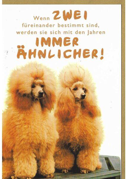 Grußkarte lustig Hunde Pudel Spruch