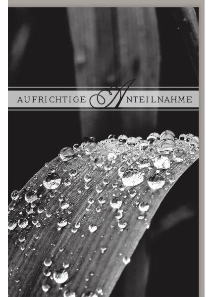 Trauerkarte Regentropfen dunkel Aufrichtige Anteilnahme
