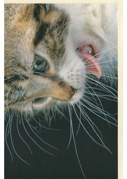 Karte mit Tier ohne Text: Katze zeigt Zähne