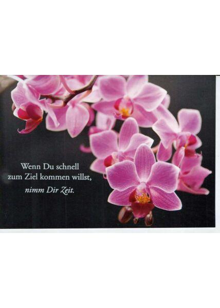 Karte Spruch: schwarz mit pinken Orchideen