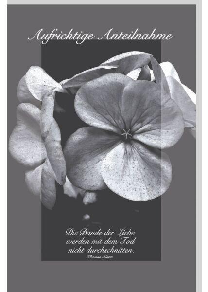 Trauerkarte Kondolenz schwarz weiß Aufrichtige Anteilnahme