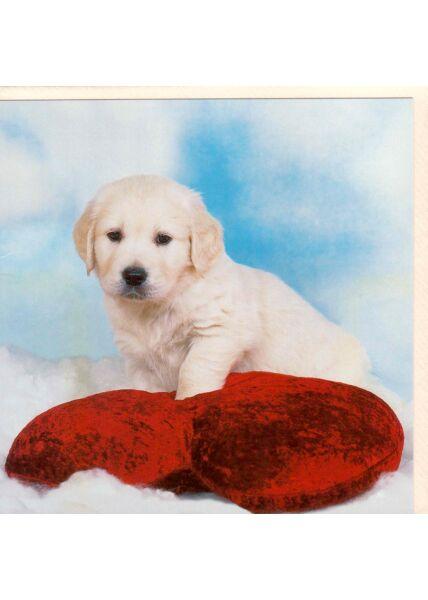 Grußkarte quadratisch ohne Text Hund Welpen Labrador