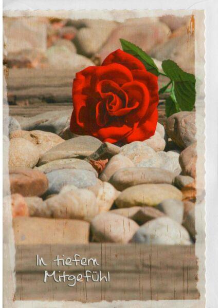 Trauerkarte Rose auf Steinen In tiefem Mitgefühl