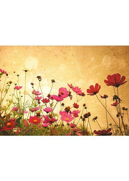 Blumenkarte Poppy Flowers