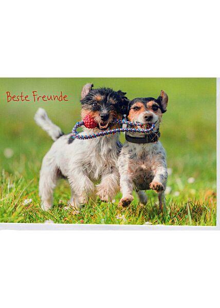 Grußkarte Freund/in: zwei Hunde