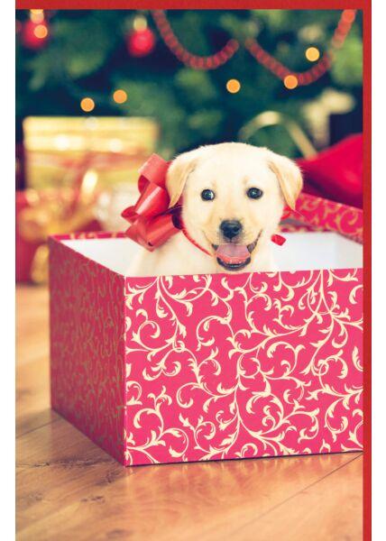 Weihnachtskarte Hund Welpen Geschenk neutral
