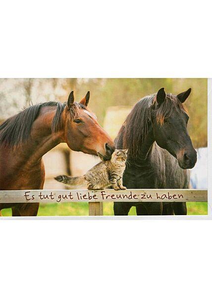 Grußkarte Freundschaft Pferde und Katze