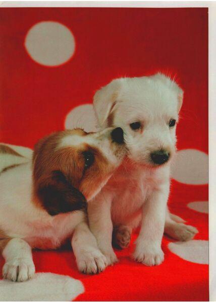 Grußkarte Hundewelpen Decke rot
