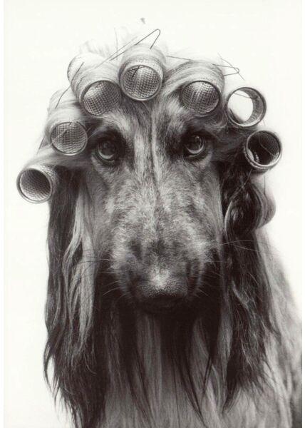 Postkarte Hund mit Locken