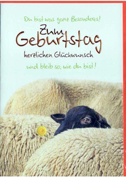 Geburtstagskarte lustig: Zum Geburtstag schwarzes Schaf
