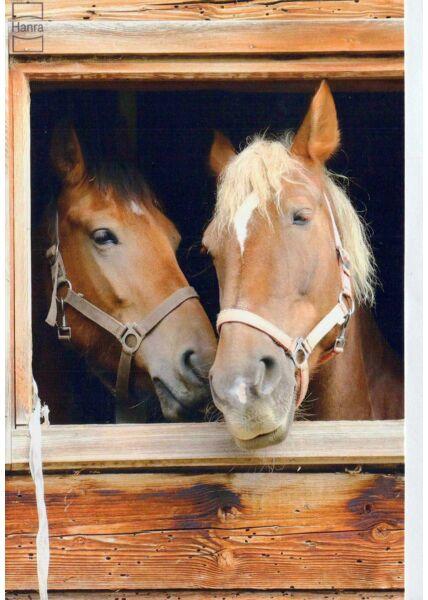 Karte blanko: zwei Pferde