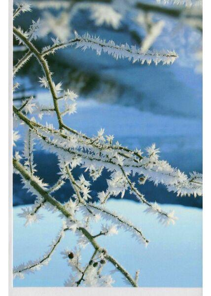 Grußkarte Winterlandschaft Ast vom Baum