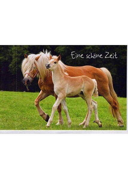 Grußkarte: zwei Pferde