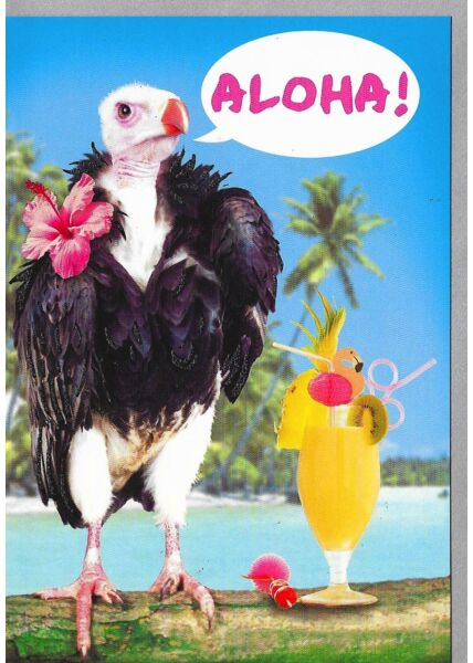 Geburtstagskarten lustig Geburtstagskarte witzig Aloha