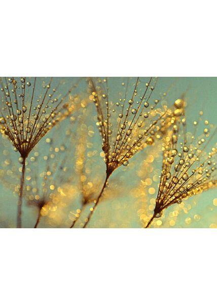 Schöne Blumen Postkarte Magic Beauty