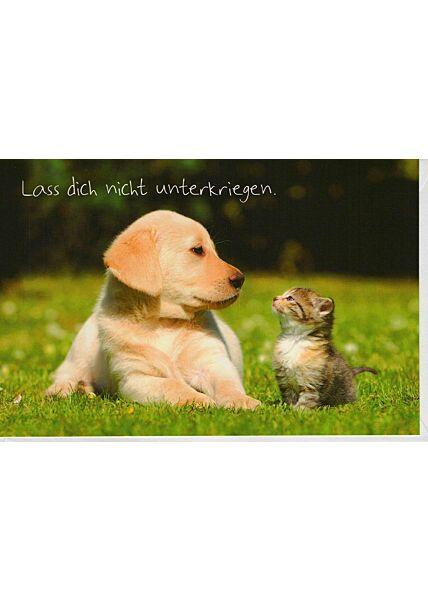 Grußkarte Hund und Katze Spruch unterkriegen