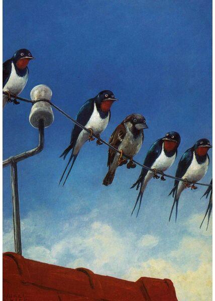 Postkarte blanko Vögel auf Kabel
