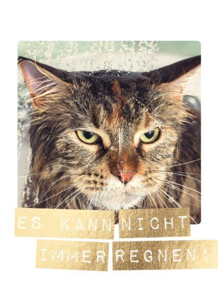 Postkarte Spruch nasse Katze. Es kann nicht immer regnen