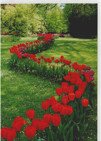Grußkarte Blumen rote Tulpen Wiese