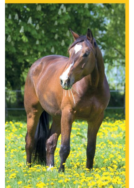 Blankogrußkarte Pferd auf Wiese