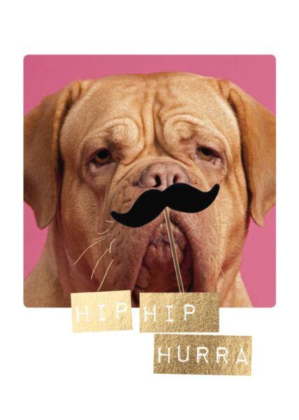 Postkarte Spruch Hund mit Schnäuzer Hip Hip Hurra