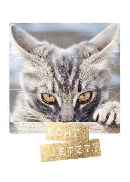 Postkarte lustig Katze Echt jetzt?