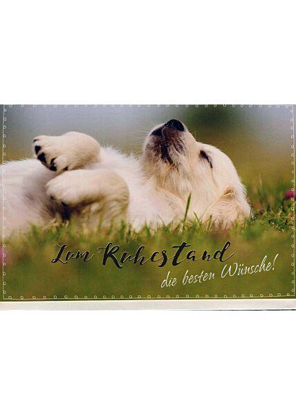 Karte Ruhestand: schlafender Hund im Gras