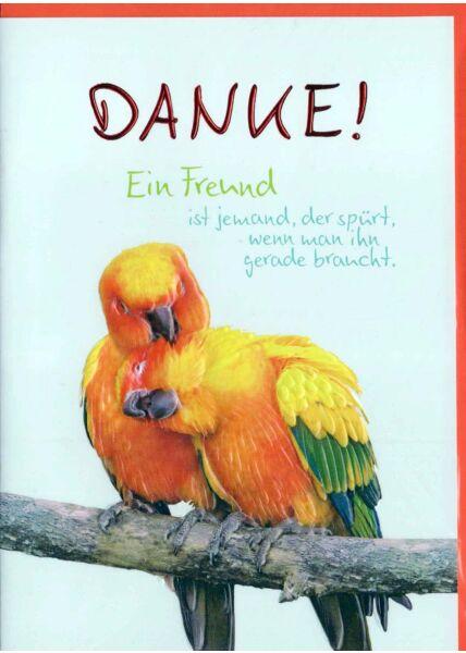 Karte Danke: Papageien