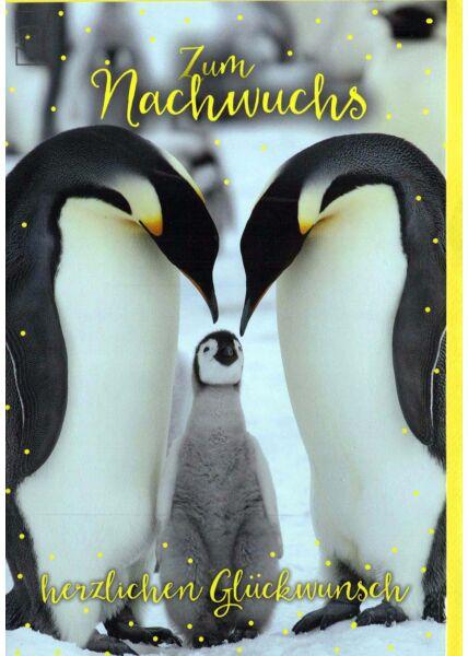 Karte Geburt: Pinguine