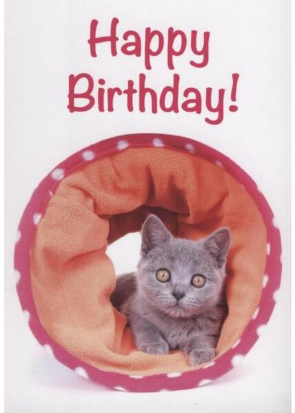 "Geburtstagspostkarte Katze Tier: ""Happy Birthday"""