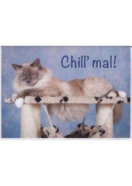 Grusskarte lustig, Katze, Tiermotiv: Chill mal!