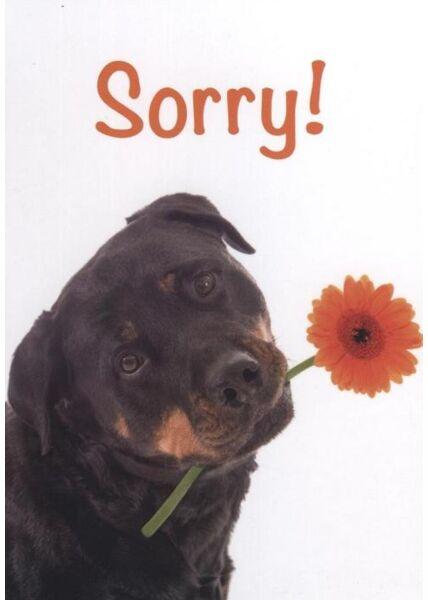 Tierpostkarte: Sorry!