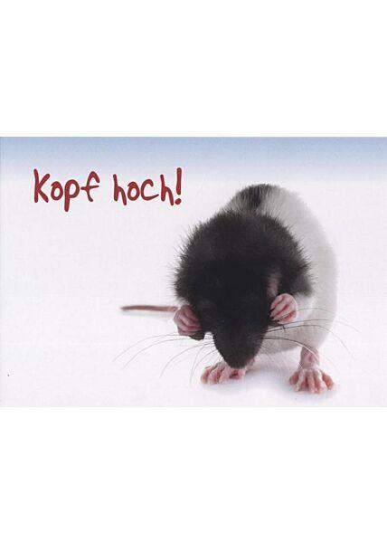 Tierpostkarte Aufmunterung: Kopf hoch!