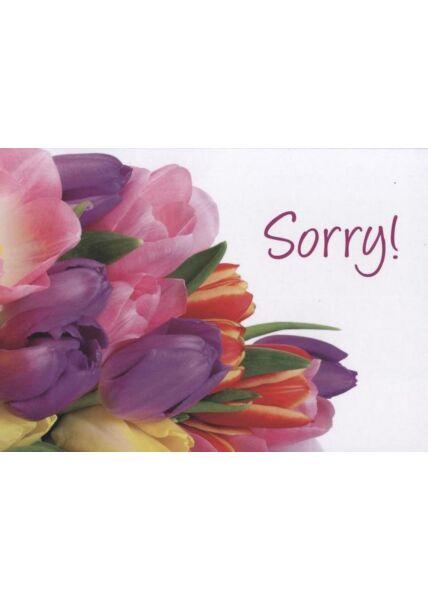 Postkarte Tulpen: Sorry!