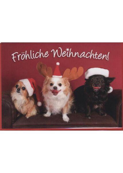 Weihnachtskarte Hunde -Tiermotiv: Fröhliche Weihnachten