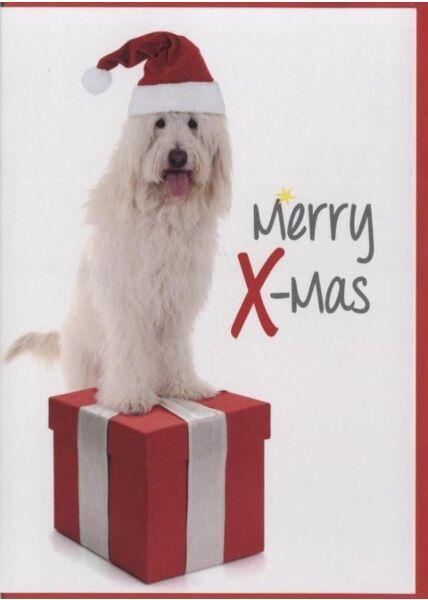 Weihnachtskarte Hunde -Tiermotiv: Merry X-Mas